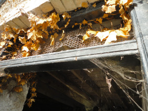Image of cobwebbed autumn doorway