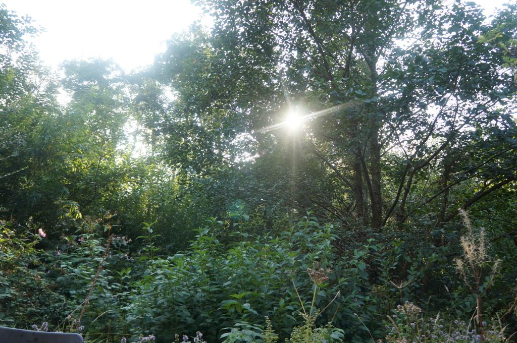 Sunlight poking through trees